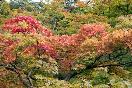 Kyoto 5 (28)