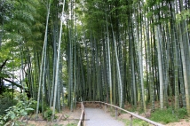Kyoto 5 (32)