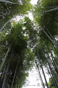 Kyoto 5 (35)