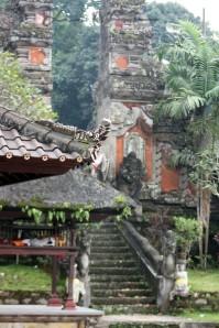 Bali (110)