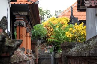 Bali (126)