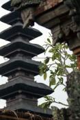 Bali (130)