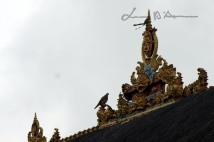 Bali (74)