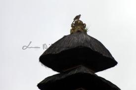 Bali (90)